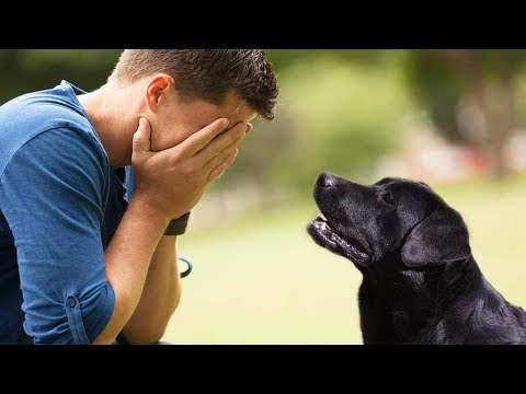 When he found out who the dog's previous owner was, he could not return the dog to the shelter