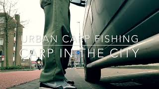 Urban Carp Fishing - Carp in The City