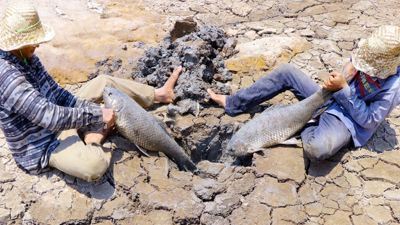 Find Secret Hole Fish In Dry Season | They Caught Giant Fish From UNDERGROUND Dry Mud