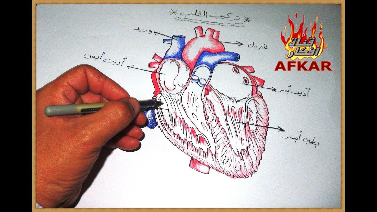 رسم تركيب اجزاء القلب بالحبر الجاف من قناة افكار المدهشة Youtube
