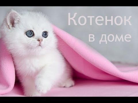 Воспитание кошки в домашних условиях