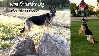 Sunday Fun with our Dog - Local Walk with our German Shepherd Bridge + Catching Frisbee 6x in a row!