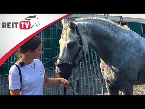 Fma Anna Begleitet Philipp Weishaupts Pferde Auf Dem Turnier Der Sieger Youtube