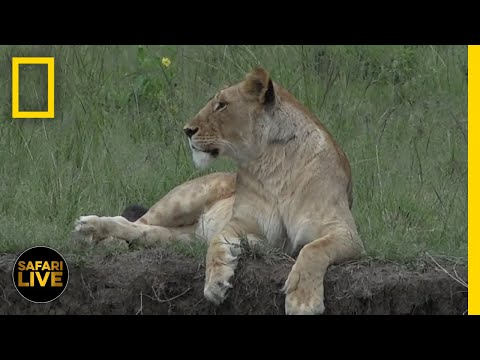 Safari Live - Day 65 | Nat Geo WILD