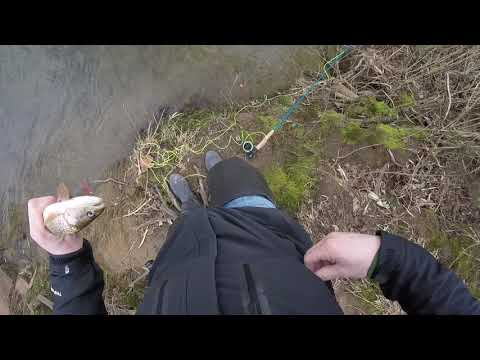 Fly Fishing Mitchell River Dobson NC