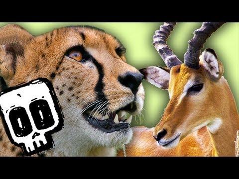 Cheetah vs Gazelle | Deadliest Showdown (Ep 3) | Earth Unplugged