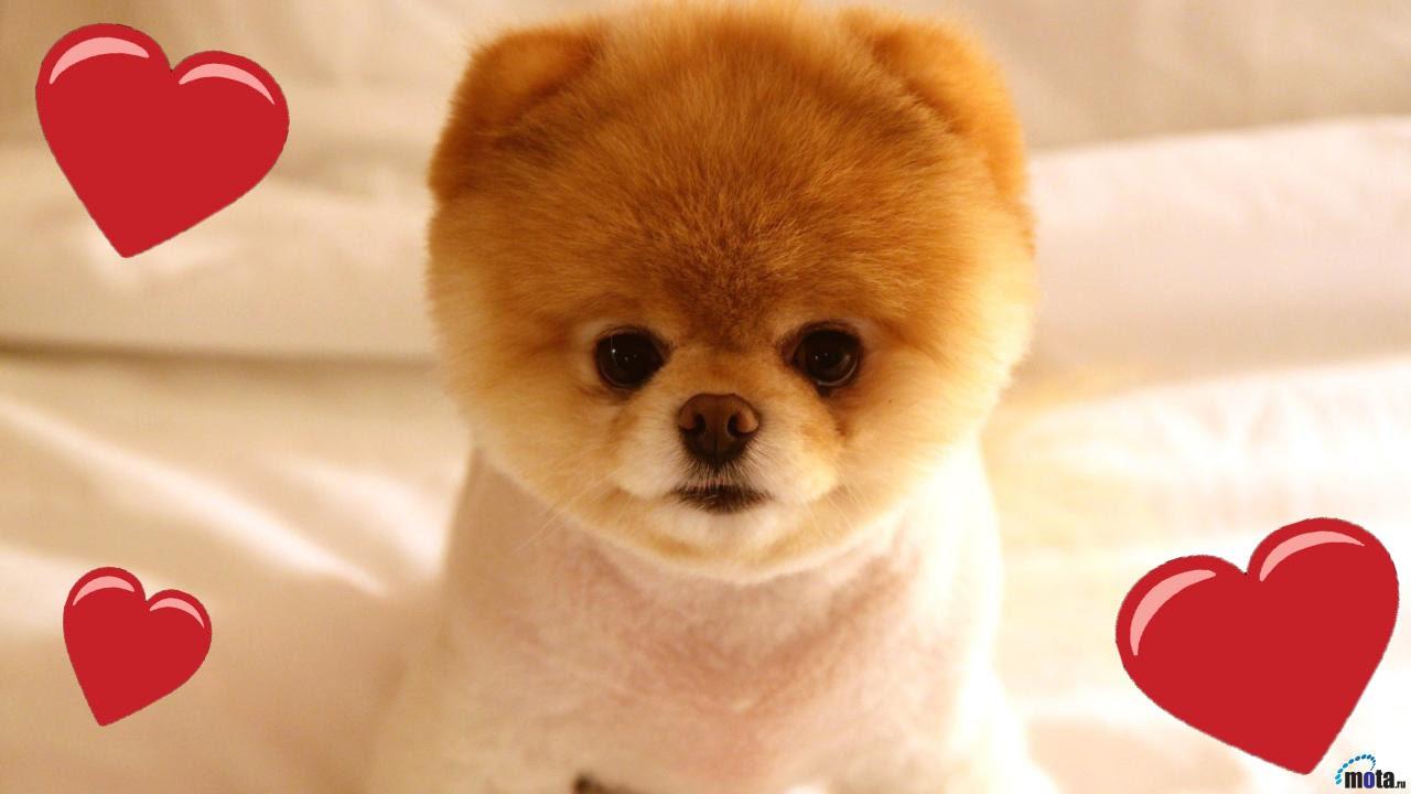 I 5 Cuccioli Più Piccoli E Teneri Del Mondo Youtube