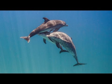 Dolphins: Breaking the Code - Full Episode