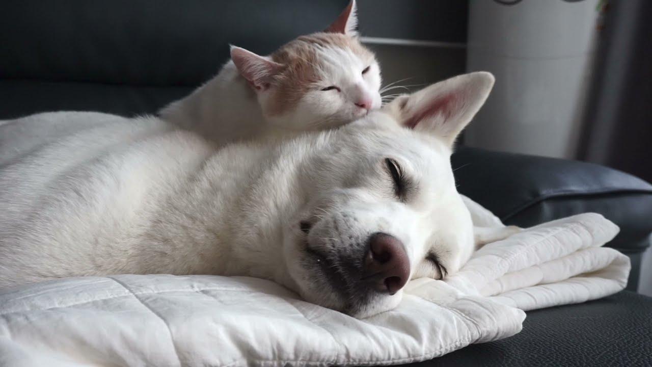 합사 5개월 강아지와 고양이 근황 ㅣ 진돗개