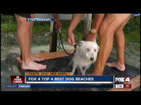 Best beaches for dogs in Southwest Florida