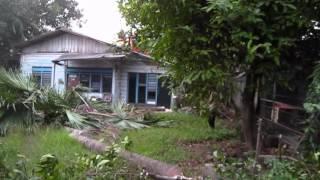 Bunga Rampai TiVi 172 ada berapa pohon kelapa yang masih berdiri di dalam video ini