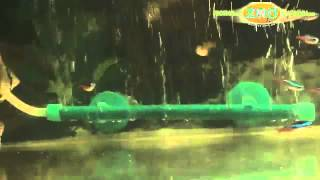 Аквариум и аквариумные рыбки(Как правильно выбрать аквариум, в каком стиле сделать дизайн, каких рыбок заселить, какой фильтр лучше,..., 2014-01-09T12:53:55.000Z)