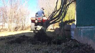 Vid #61 - pulling out small tree with 2016 Honda Rancher 4x4 DCT EPS
