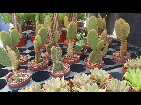 Plant Nursery Tour and Plant Haul - Union Square Green Market NYC