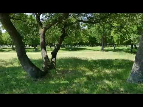5 In padure la Muntii Macinului din Dobrogea, Romania