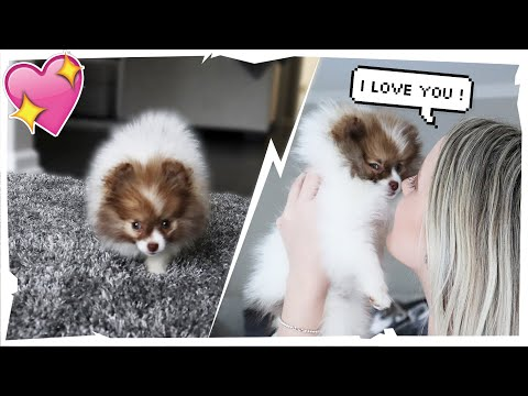 SURPRISING My GIRLFRIEND With A NEW PUPPY!!   Tricia & Kam