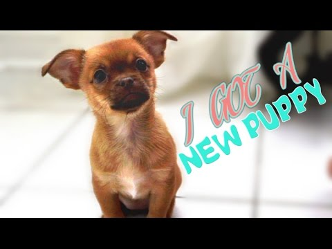 NEW PUPPY! | 65,000 Subscribers