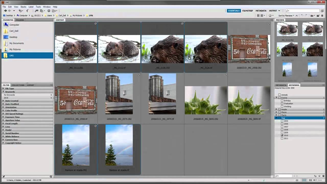 how to search in adobe bridge