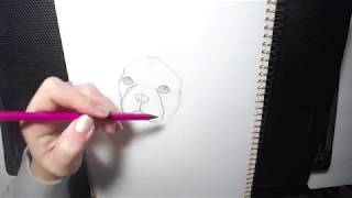 How to Draw a Dog (French Bulldog/Boston Terrier) Part 1