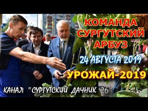 СУРГУТСКИЙ АРБУЗ НА УРОЖАЙ-2019.