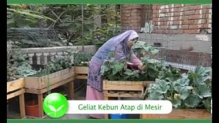 Video Geliat Kebun Atap di Mesir download MP3, 3GP, MP4, WEBM, AVI, FLV Juni 2018