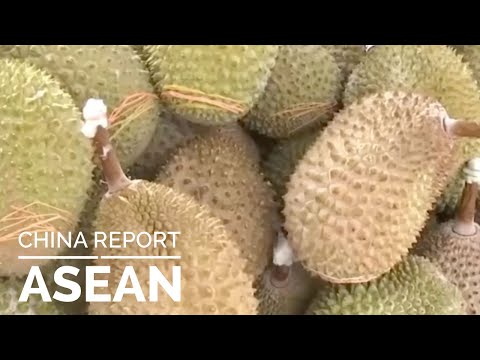 Malaysian Durian In China   Did You Know   China Report ASEAN