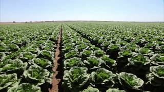 Yuma Arizona Lettuce Farm - America's Heartland