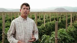 Producepedia.com : Meet California and Arizona Family Farmers