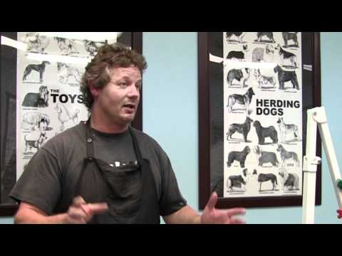 dog-grooming-school-education-expectations-|-chicago-illinois-dog-grooming-school