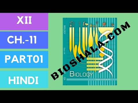Chapter 11 biotechnology:principle and process part1 (HINDI/NCERT level) thumbnail