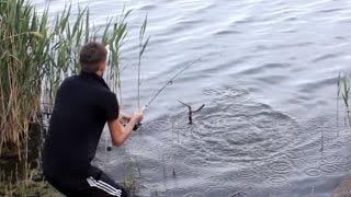 Рыбалка на закидушку и флет  в Краснодарском Крае! Белый Амур и Зеркальный Карп!
