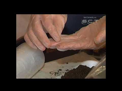 Братчане разводят дождевых червей для получения ценного удобрения - Смотреть видео онлайн