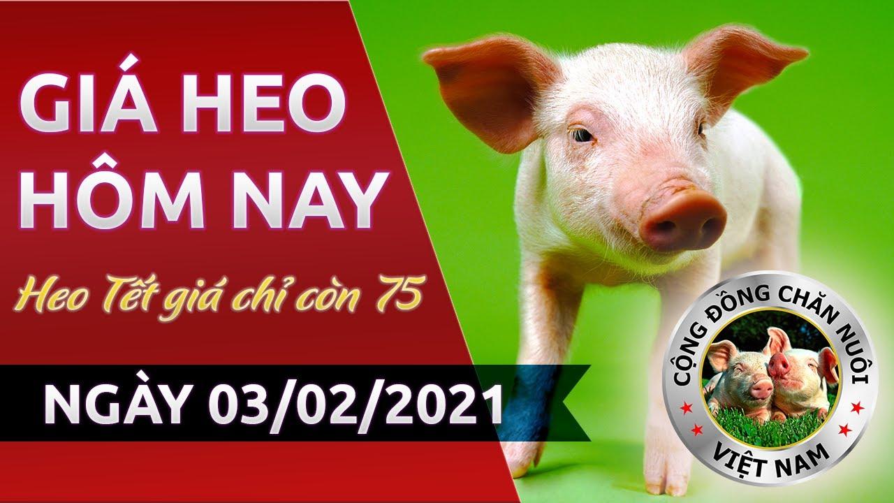 Giá heo hôm nay 3/2/2021 | Giá lợn hơi hôm nay giảm mạnh cả nước, giá heo hơi không tăng dịp Tết?