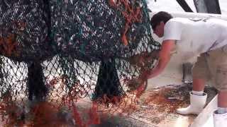 NC Pamlico Sound Shrimp Trawl Bycatch North Carolina