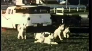 Jimmy Wilton Horse And Dog Display