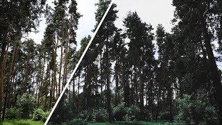 Эксклюзивная обработка лесной фотографии | Ретуширование фото #1