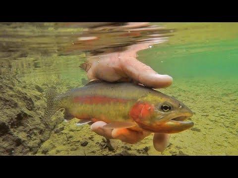 We Caught The Rarest Fish In North America!