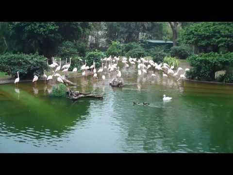 HD Tour of Hong Kong - Kowloon Park 2