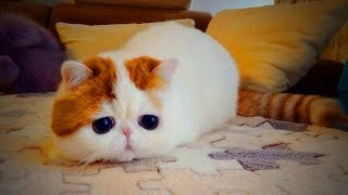 Cute Funny Kittens 😜🐱 Funny Cats (Part 1) [Funny Pets]