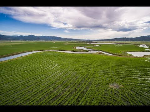 Northern California Ranch | Wild Rice River Ranch, Lassen County California