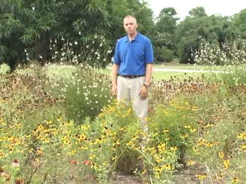 Pitt County Arboretum Tour