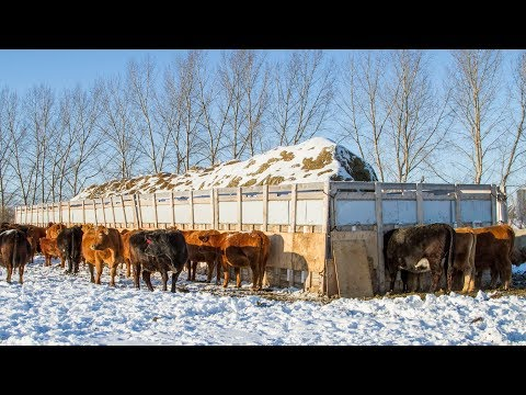 1600sq/ft Custom Cattle Feeder