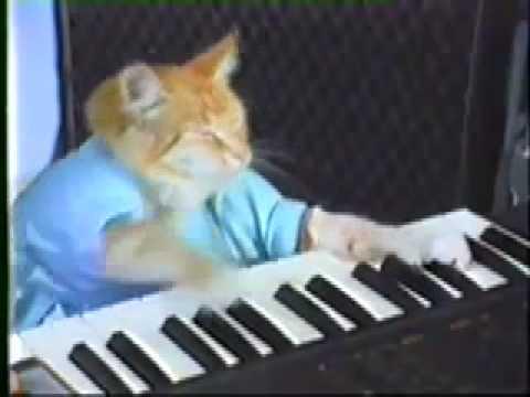 keyboard cat on electric guitar youtube. Black Bedroom Furniture Sets. Home Design Ideas