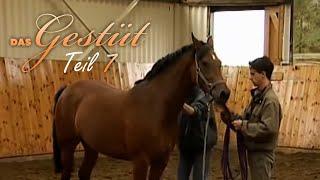 Das Gestüt - Teil 7 - Pferdehandel Dokumentation, deutsch, Pferdedoku, Tierfilm, Doku für Kinder