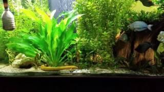 125 gallon freshwater planted aquarium