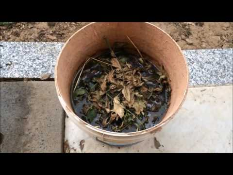 Concime buzzpls com for Concime per gerani fatto in casa