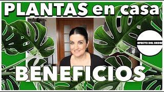 CONOCE los BENEFICIOS de tener PLANTAS en CASA    Efecto del Orden