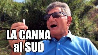 LA CANNA al SUD