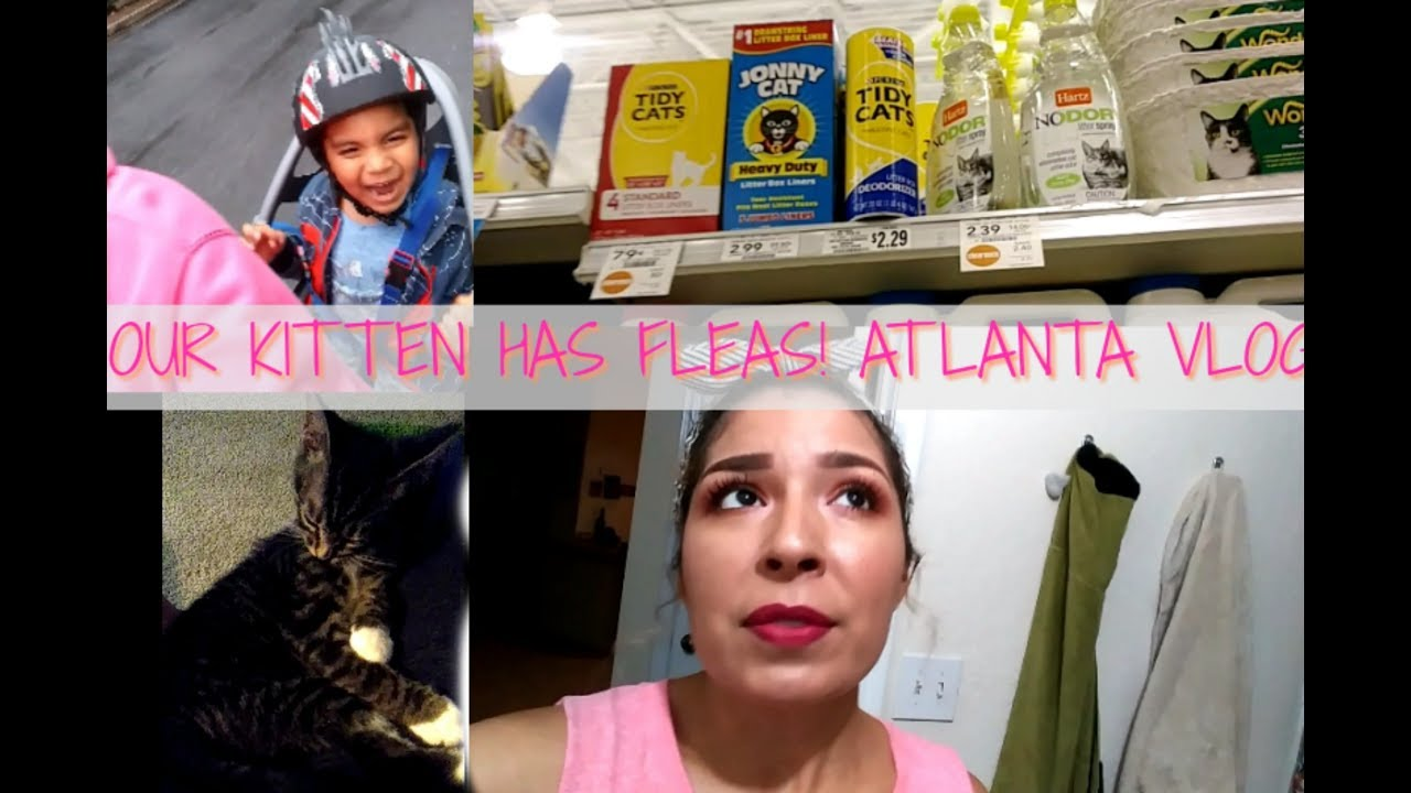 our kitten has fleas how to get rid of fleas on cats lulu