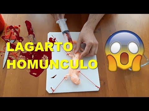 LAGARTO HOMÚNCULO ¿ REAL ?